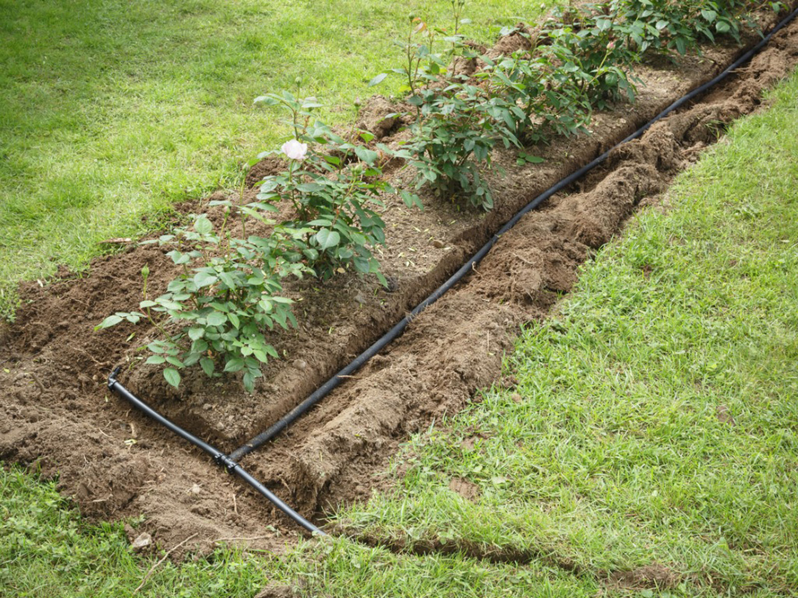 A Guide to Plumbing Irrigation Systems for Gardens